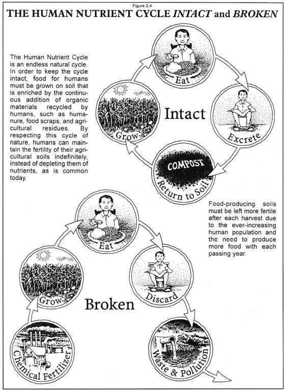 0201 HUMAN NUTRIENT CYCLE – Nutrient Cycle Worksheet
